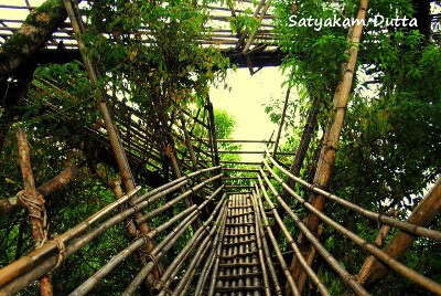 Way to Sky - A Tree Top View of Mawlynnong Village