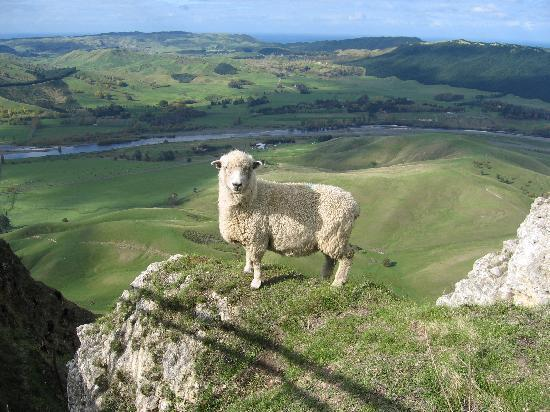 Rugby, Sheep and Itchy Feet