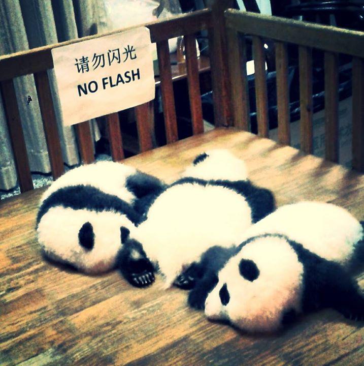 Panda's on my mind.