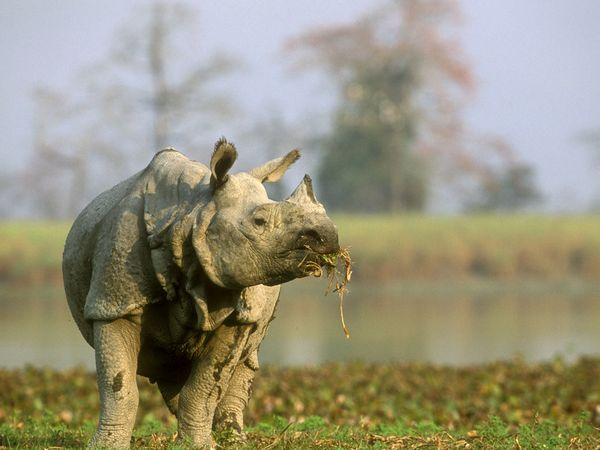MoEF to submit report by January 9 on ways to protect Kaziranga