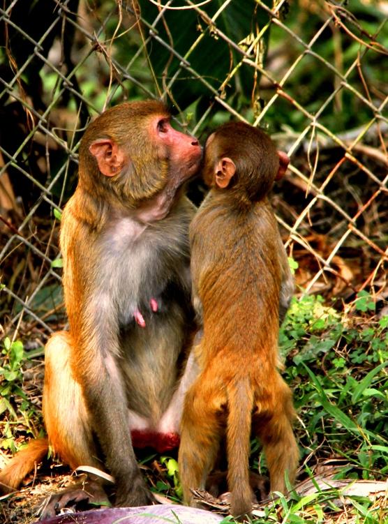 Monkey Love Photograph by Uttama Pallavi Pandit