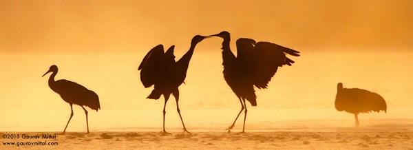 4. Sandhill Cranes, Bosbque New Mexico (Processed in colour Efex Pro)