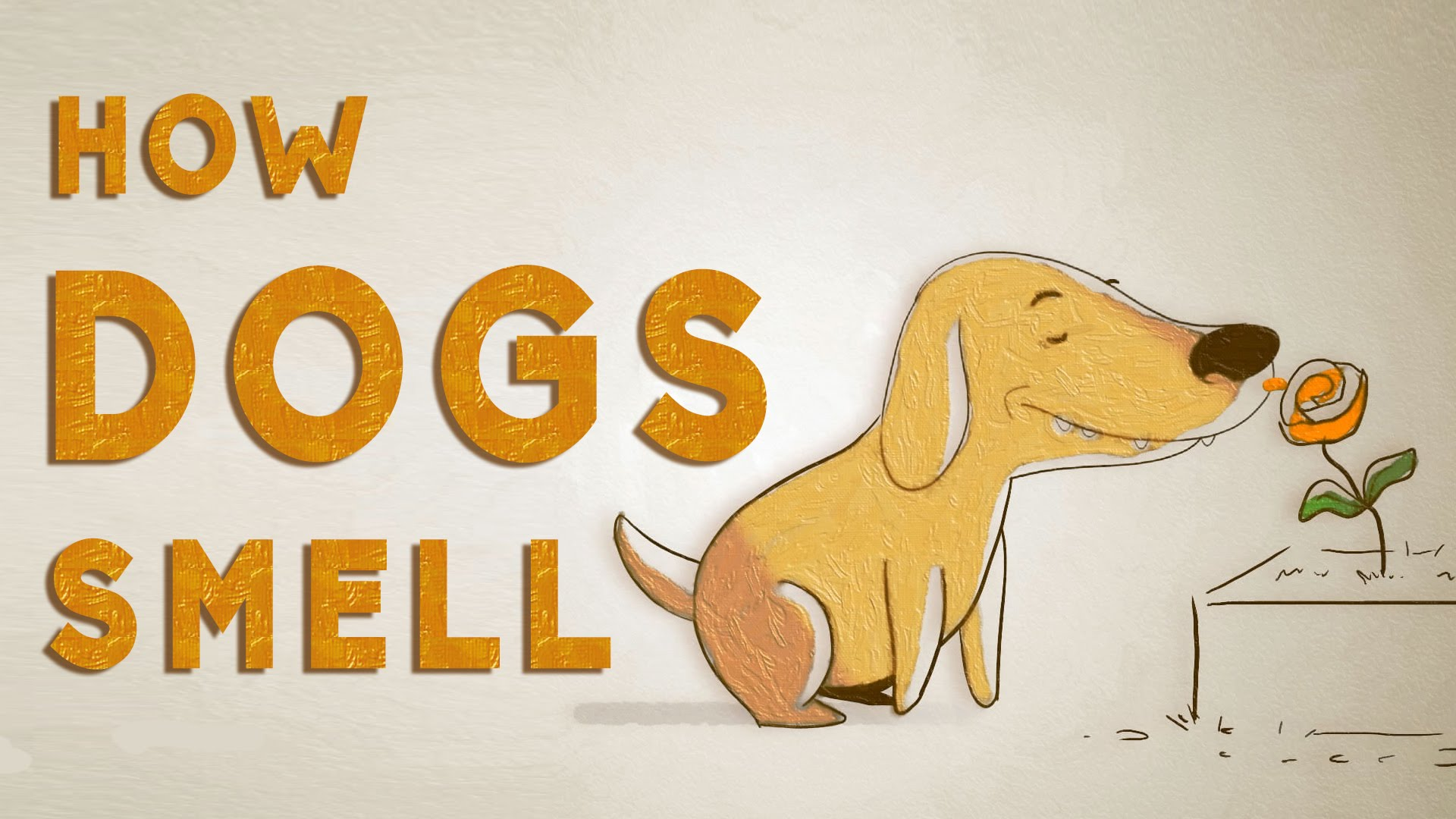 """Video: How do dogs """"see"""" with their noses?"""
